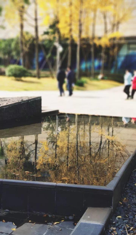 我眼中的成都——公园篇-